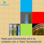 """Teste para Escherichia coli e os cuidados com a """"falsa"""" fluorescência!"""